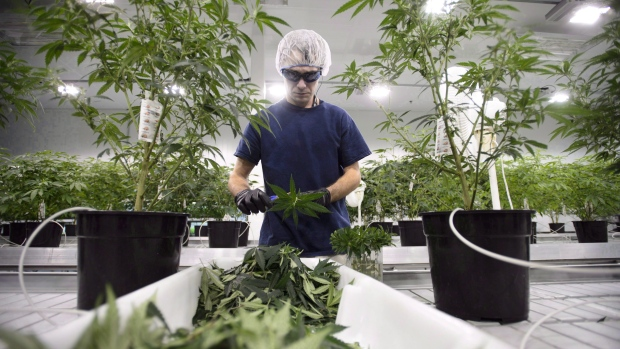 Canopy Growth revenue beats estimates as cannabis sales soar