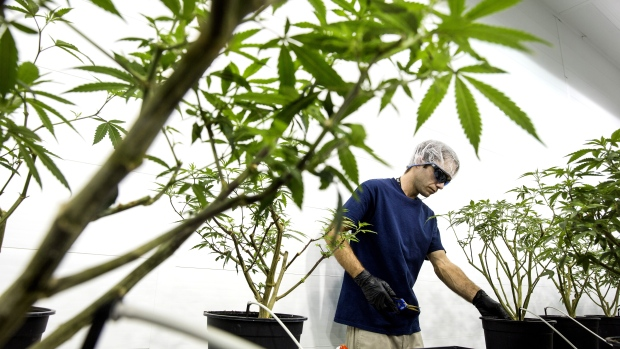 Canopy Growth to buy Acreage in $3.4 billion deal