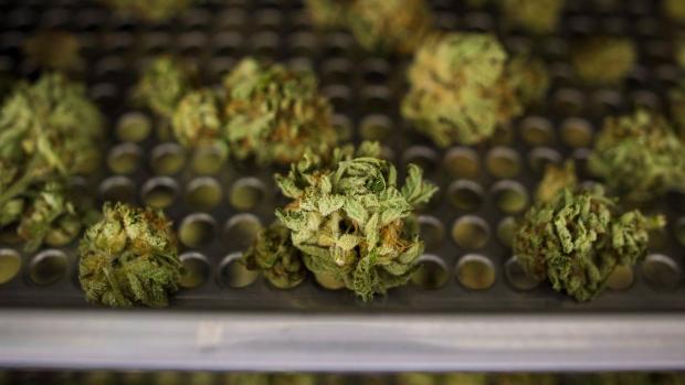 One month after legalization, illicit pot shops doing brisk business