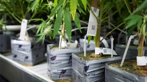 plant tycoon plant bucks