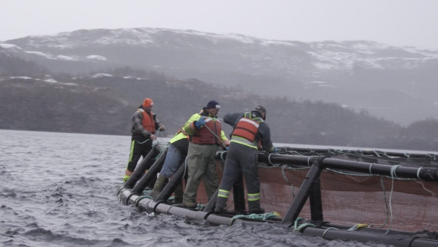 Cooke Aquaculture farmers secure nets at a sea site Newfoundland in this undated handout photo