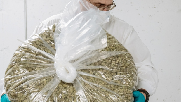 A worker holds a bag of marijuana buds at a cannabis production facility in Fenwick, Ontario, Canada.