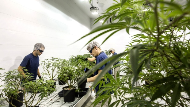 Canopy Growth up 9% premarket on takeout of US cannabis operator