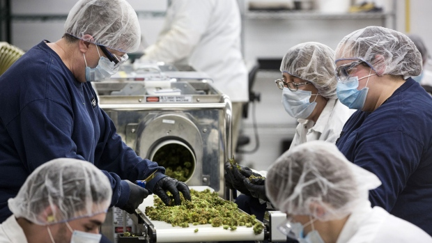 Employees inspect and sort marijuana buds for packaging at the Canopy Growth Corp. facility in Smith Falls, Ontario, Canada.