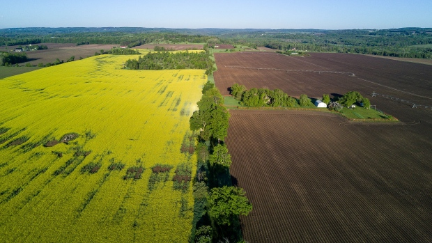 A canola field sits next to a plowed field in this aerial photograph taken above Orangeville