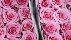 Packages of pink roses sit at the Import Flowers Inc. warehouse ahead of Valentine's Day in Nashville, Tennessee, U.S., on Tuesday, Feb. 12, 2019