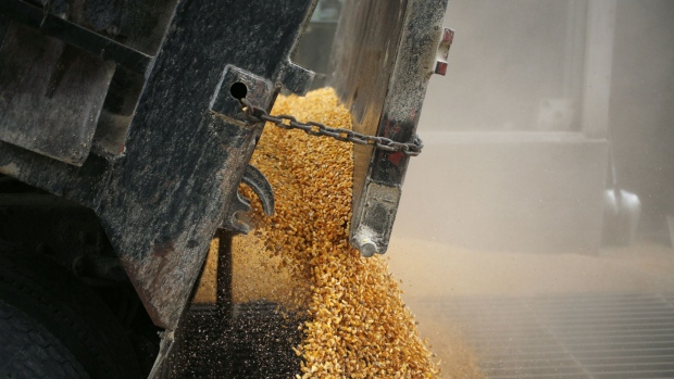 Kernels of corn are unloaded from a truck at the Kokomo Grain Co. Inc. transloading facility in Edinburgh, Indiana, U.S., on Thursday, March 28, 2019. The trade war is having a bigger-than-expected effect on U.S. farmers' planting decisions at a time when silos are bulging with grain stockpiles. May corn futures fell to a record low.