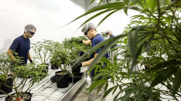 Employees work in the Mother Room at the Canopy Growth Corp. facility in Smith Falls, Ontario