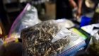 A vendor bags psilocybin mushrooms at a pop-up cannabis market