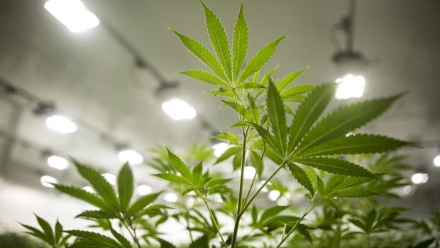 Canopy to buy Supreme Cannabis for $435M amid premium brand push - Art... image