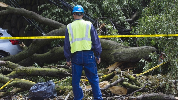 A Consolidated Edison worker stands in front of a fallen tree and power lines in Queens, New York, on Aug. 7.