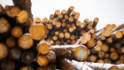 Logs sit stacked at a Western Canadian Timber Products Ltd. site near Harrison Mills, British Columbia, Canada, on Tuesday, Feb. 4, 2020.