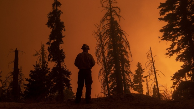 CAMP NELSON, CA - SEPTEMBER 14: A firefighter keeps watch as flames advance along the Western Divide Highway during the SQF Complex Fire on September 14, 2020 near Camp Nelson, California. The SQF Complex Fire has grown to more than 90,000 acres and burned scores of homes. California wildfires that have already incinerated a record 2.3 million acres this year and are expected to continue till December. (Photo by David McNew/Getty Images)