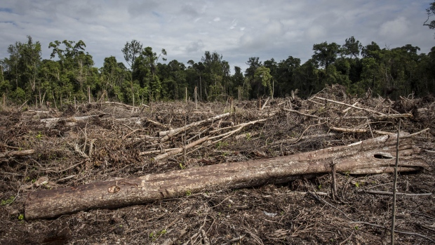 TRUMON, INDONESIA - NOVEMBER 13: A view of recently land clearing for palm oil plantation of the peatland forest inside Singkil peat swamp Leuser ecosystem, habitat of Sumatran orangutan (Pongo abelii) in Iemeudama village on November 13, 2016 in Trumon subdistrict, South Aceh, Aceh province, Indonesia. The Orangutans in Indonesia have been known to be on the verge of extinction as a result of deforestation and poaching. Found mostly in South-East Asia, where they live on the islands of Sumatra and Borneo, the endangered species continue to lose their habitat as a result of corporate expansion in a developing economy. Indonesia approved palm oil concessions on nearly 15 million acres of peatlands over the past years and thousands of square miles have been cleared for plantations, including the lowland areas that are the prime habitat for orangutans. (Photo by Ulet Ifansasti/Getty Images)