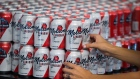 A worker arranges cans of Molson Coors Brewing Co. Canadian beer
