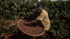 A worker harvests coffee on a farm in Alfenas, Minas Gerais state, Brazil, on Tuesday, May 28, 2019. As coffee prices globally trade near the lowest in 13 years, Brazil's coffee boom is posing huge challenges for coffee farmers in various corners of the world.