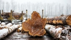 The end of a cut log is seen at a Western Canadian Timber Products Ltd. site near Harrison Mills, British Columbia, Canada, on Tuesday, Feb. 4, 2020. Wild weather helped make niche commodities, including lumber, big winners in 2019 and the commodity's rally is expected to continue in 2020. Photographer: James MacDonald/Bloomberg