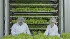 MARKET ONE - CubicFarms provides sustainable and profitable commercial-scale automated indoor growin