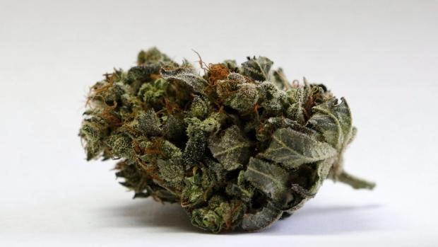 Marijuana Stock Euphoria Should You Join The Wild Ride Bnn