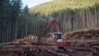 A section of forest is harvested by loggers near Youbou, B.C.