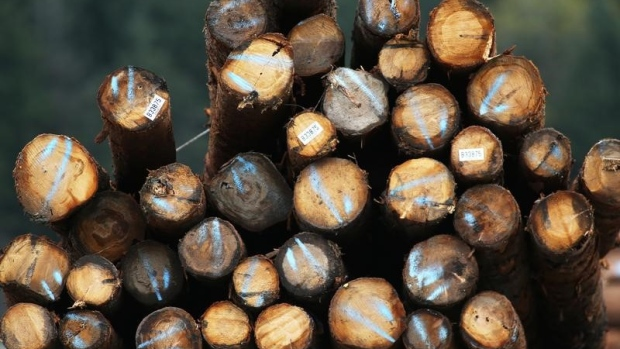 Softwood lumber: A pile of logs is pictured in Squamish, British Columbia, Canada
