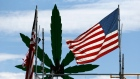 Marijuana leaf U.S. flag cannabis weed pot America