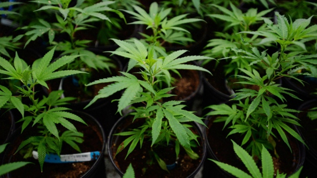 British Columbia to sell recreational marijuana in pot-only stores
