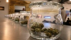Weed for sale is kept in jars for customers to sample smells, at a recreational marijuana store