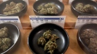 Different types of marijuana sit on display at Harborside marijuana dispensary, Monday, Jan. 1, 2018
